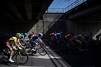 peloton under the bridge<br /> <br /> 76th Dwars door Vlaanderen 2021 (MEN1.UWT)<br /> 1 day race from Roeselare to Waregem (184km)<br /> <br /> ©kramon