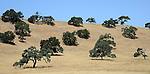 Trees contrast on a dry hillside. (DOUG WOJCIK MEDIA)