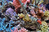 A variety of aquarium corals. Upscales store. Tualitin. Oregon