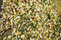Chopped forage maize for Anaerobic Digestion