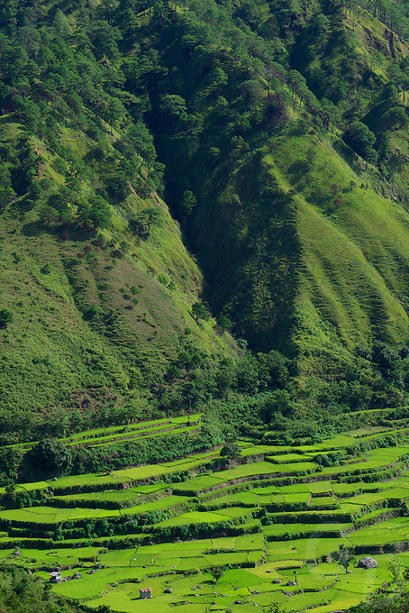 Sagada/Bontoc Rice terrasses Philippine Mountain Province