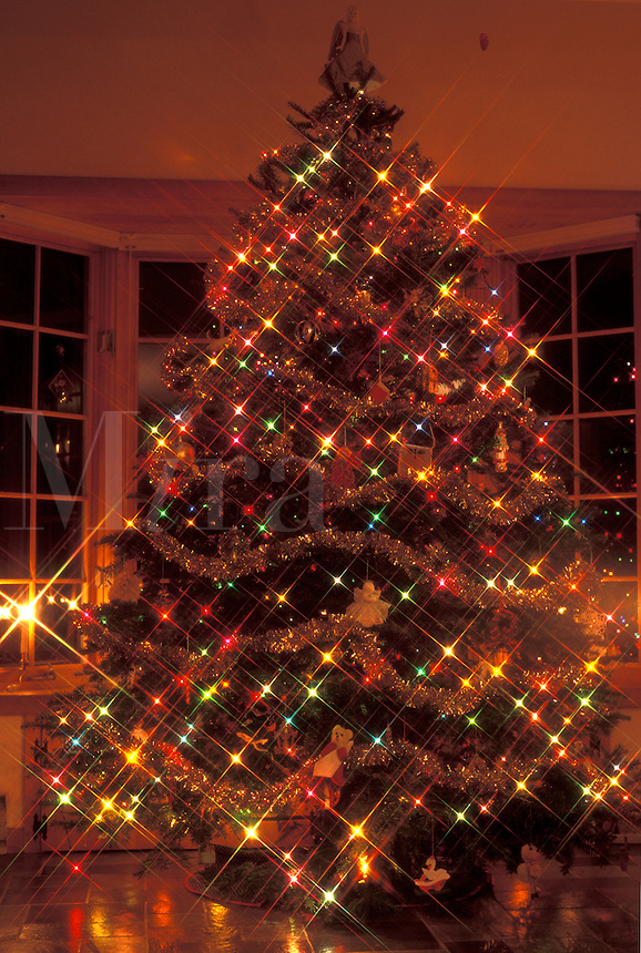 AJ4652, Christmas tree, lights, Vermont, A beautiful tall Christmas tree with tiny colorful lights stands inside a home at night for the holiday season in Essex Junction in Chittenden County in the state of Vermont.