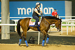 DUBAI,UNITED ARAB EMIRATES-MARCH 30: West Coast,trained by Bob Baffert,exercises in preparation for the Dubai World Cup at Meydan Racecourse on March 30,2018 in Dubai,United Arab Emirates (Photo by Kaz Ishida/Eclipse Sportswire/Getty Images)