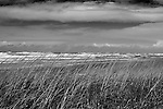Sea Grass on sand dunes bends in high wind as storm driven surf crashes ashore.  Long Beach, WA Olympic Peninsula
