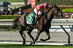 """ARCADIA, CA. SEPTEMBER 30:  #5 Avenge, ridden by Flavien Prat, in the stretch of the Rodeo Drive Stakes (Grade l) """"Win and You're In Filly and Mare Turf Division"""" on September 30, 2017 at Santa Anita Park in Arcadia, CA.(Photo by Casey Phillips/Eclipse Sportswire/Getty Images)"""