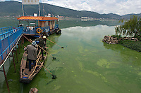 People is trying to clean up the algae in the Dianchi Lake in Kunming, China. Despite hundreds of millions of dollars being spent on years of clean-up efforts, a large amount of algae has bloomed in Dianchi Lake, turning the water as green as paint in a stretch along the shore. Dianchi is China's sixth-largest freshwater lake. It has suffered from severe pollution since the early 1990s and was plagued by algal blooms each summer..26 Jun 2007