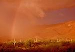 Saguaro desert landscape, Arizona