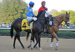 Picko's Pride, ridden by Israel Ocampo, in the post parade before the grade 2 Rebel Stakes for three year olds on March 19, 2011 at Oaklawn Park in Hot Springs, Arkansas.  (Bob Mayberger/Eclipse Sportswire)