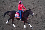 November 4, 2020: Starship Jubilee, trained by trainer Kevin Attard, exercises in preparation for the Breeders' Cup Mile at Keeneland Racetrack in Lexington, Kentucky on November 4, 2020. John Voorhees/Eclipse Sportswire/Breeders Cup/CSM