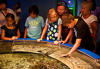Kids touch marine life at a touching tank, Mystic Aquarium, Mystic, Connecticut, CT, USA