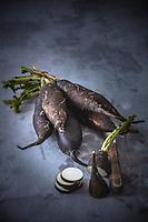 Gastronomie Générale /Diététique/ Radis Noir Bio //  General Gastronomy / Diet / Organic Black Radish