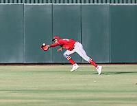 Alexander Ramirez - 2021 Arizona League Angels (Bill Mitchell)