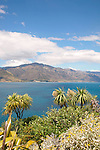 Lake Hawea and Cabbage Trees, New Zealand