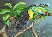 Lori, REALISTIC ANIMALS, REALISTISCHE TIERE, ANIMALES REALISTICOS, zeich, paintings+++++BeautifulTucan,USLS129,#a#, EVERYDAY ,puzzle,puzzles