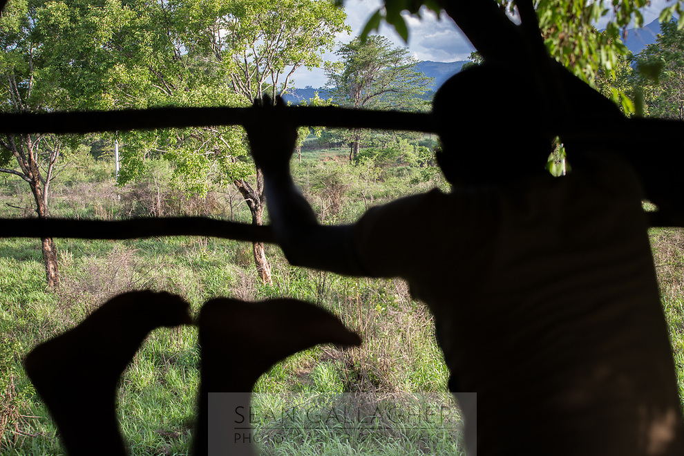 A warden from the Sri Lanka Wildlife Conservation Society looks out of a treehouse, watching and monitoring wild elephants.