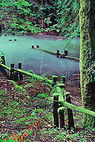 A fine art landscape of a flooded path in Armstrong Redwoods State Park, California, after record winter rains, with strong brilliant greens of forest ferns and redwood fronds and moss.  The path is bordered by zig-zagging, split-rail wooden fences, also coated with green moss, and redwood trees reflecting in the pool of water submerging the path and railings.