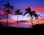 Pink sunset over Palm Trees and the Sea, Mauna Kea Beach.Kohala Coast, Big Island, Hawaii