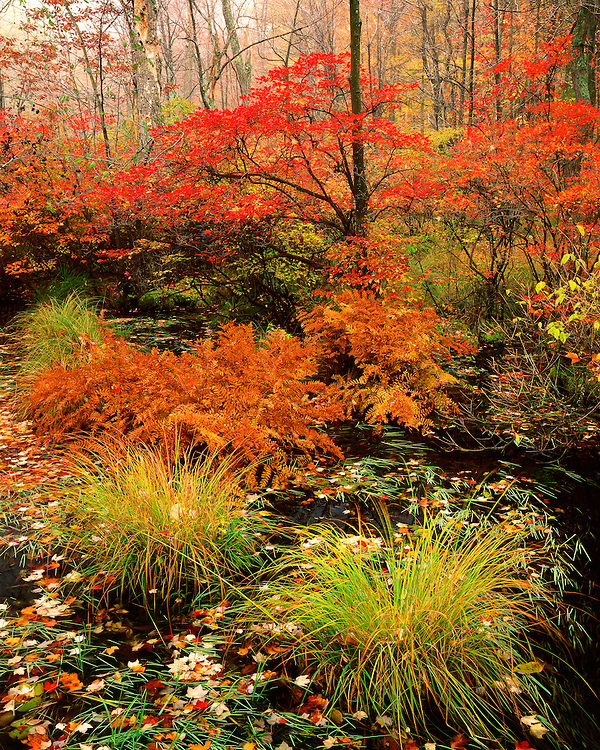 Fall color along a pond in the Delaware State Forest; Pike County, PA
