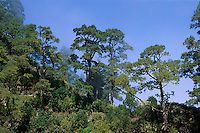 Spanien, Kanarische Inseln, La Palma,  Berglandschaft Las Candelitas