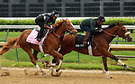 """LOUISVILLE, KY - APRIL 23: Weep No More (Mineshaft x Crosswinds, by Storm Cat) works in company (oustide, pink saddle cloth) with stablemate No Fruit (in """"Work Mate"""" saddle cloth) at Churchill Downs, Louisville KY in prepartion for the Kentucky Oaks. She breezed 4 furlongs in :49.2. Owner Ashbrook Farm, trainer George R. Arnold II. (Photo by Mary M. Meek/Eclipse Sportswire/Getty Images)"""