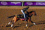 November 3, 2020: Bon Raison, trained by trainer Jack Sisterson, exercises in preparation for the Breeders' Cup Sprint at Keeneland Racetrack in Lexington, Kentucky on November 3, 2020. John Voorhees/Eclipse Sportswire/Breeders Cup/CSM