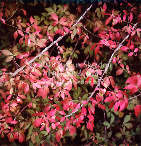 Leaves changing to red<br />