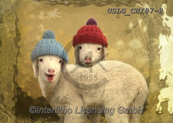 CHIARA,CHRISTMAS ANIMALS, WEIHNACHTEN TIERE, NAVIDAD ANIMALES, paintings+++++,USLGCHI87-2,#XA# ,funny ,funny