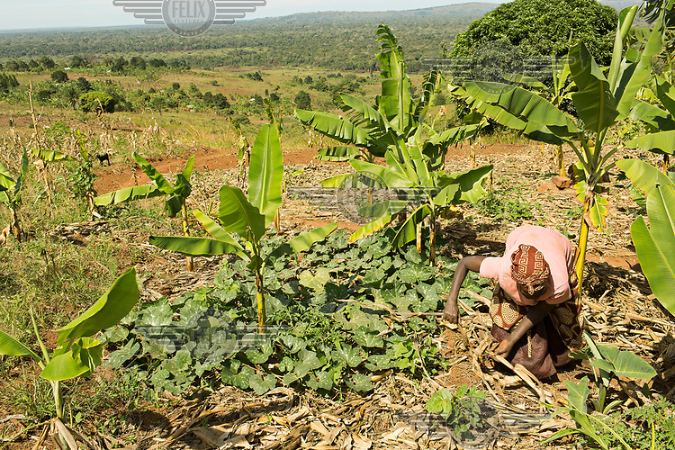 Banana plants grow among eggplants in a kitchen garden farmed by Gertrude Ndolikye (51) who is HIV+ and being treated with ARVs.