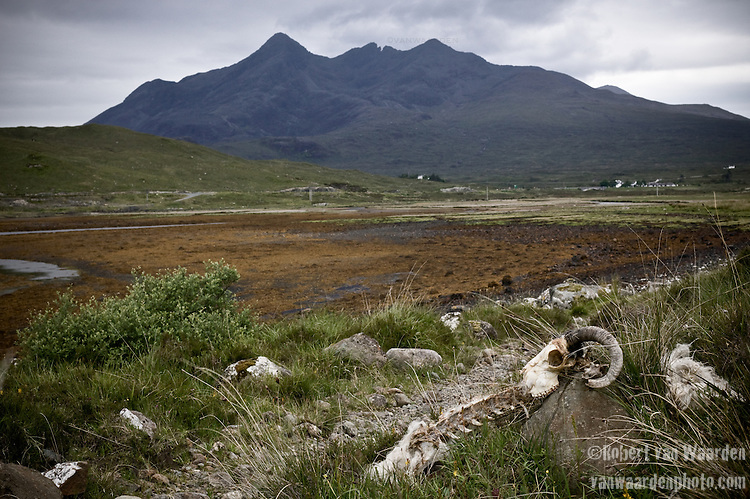 A sheep skull rests on a rock by the path, Isle of Skye, Scotland.