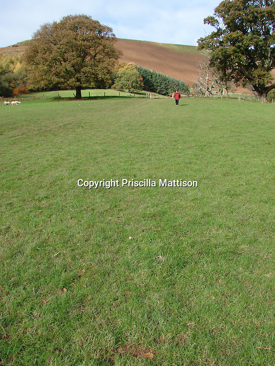 Llanthony, Wales - November 2, 2006:  A man crosses a sheep meadow in the Welsh Hills.