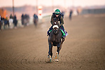 Bodenheimer, trained by trainer Valorie L. Lund, exercises in preparation for the Breeders' Cup Juvenile Turf Sprint