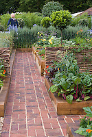 Vegetable Garden in Raised Beds Growing Wheat