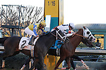 """The #9 """"Will Take Charge"""" just crossing the finish line by a nose to win the Smarty Jones stakes over #4 Texas Bling and the #2 Always in A Tiz.  Jan.21, 2013 - Hot Springs, Arkansas, U.S -   (Credit Image: © Justin Manning/Eclipse/ZUMAPRESS.com)"""