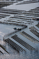 Europe/France/Aquitaine/33/Gironde/Bassin d'Arcachon: les parcs à huîtres - vue aérienne