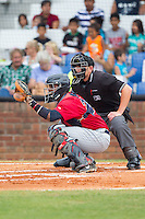 Elizabethton Twins catcher Brian Navarreto (24) sets a target as home plate umpire Brock Ballou looks over his shoulder during the game against the Johnson City Cardinals at Cardinal Park on July 27, 2014 in Johnson City, Tennessee.  The game was suspended in the top of the 5th inning with the Twins leading the Cardinals 7-6.  (Brian Westerholt/Four Seam Images)