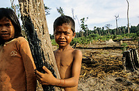 CAMBODIA, Mekong region, Stung Treng, logging of rainforest, children of settlers on deforested plots