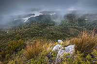 Moody scene with native vegetation and Whanganui Inlet on west coast in background, Nelson Region, South Island, New Zealand