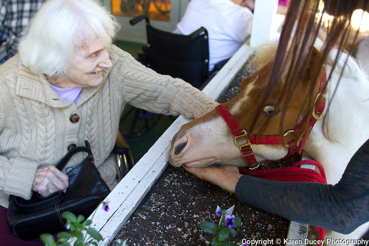 Tiny Bubbles, a dwarf miniature horse, visits with residents at the Park Ridge Skilled Nursing Center in Shoreline, Washington on July 10, 2014. Veterinarian Dana Bridges Westerman arranges the therapy visit every year.