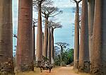 Madagascar: Plants, Habitats & Landscapes