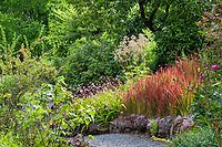 Medicinal herb garden - University of California Berkeley Botanical Garden with Angelica, Bletilla and Imperata grass