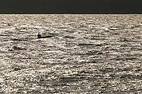 Barcos de turismo e pequenas embarcações atravessam a baia do Guajará.<br /> Belém, Pará, Brasil.<br /> Foto Paulo Santos<br /> 05/10/2013