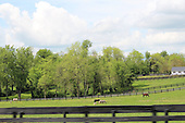 Kentucky Horse Farm