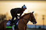 November 5, 2020: Uni, trained by trainer Chad C. Brown, exercises in preparation for the Breeders' Cup Mile at Keeneland Racetrack in Lexington, Kentucky on November 5, 2020. Alex Evers/Eclipse Sportswire/Breeders Cup