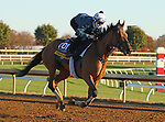 Dunbar Road, trained by trainer Chad C. Brown, exercises in preparation for the Breeders' Cup Distaff at Keeneland Racetrack in Lexington, Kentucky on November 4, 2020.