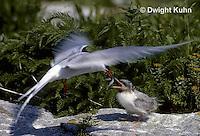 Birds (2200+ Photos)