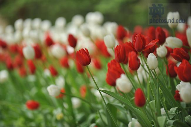 Spring scenic flowers..Photo by Matt Cashore/University of Notre Dame
