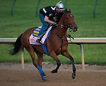Jemima's Pearl during morning workouts for the 138th Kentucky Oaks at Churchill Downs in Louisville, Kentucky on May 3, 2012.