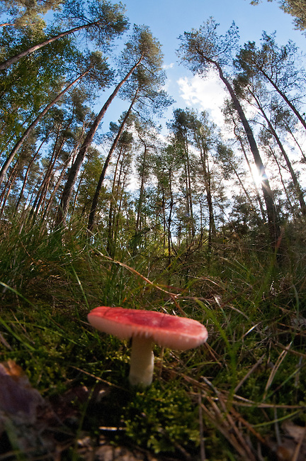 One day out mushroom picking. In a forest in Germany. A worms eye view.