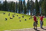 Oesterreich, Salzburger Land, Pinzgau, zwischen Maria Alm und Hinterthal: Bogenparcours am Berggasthof Jufenalm | Austria, Salzburger Land, near Maria Alm: Pinzgau, archery shooting range at mountain inn Jufenalm