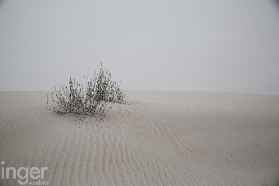 Plants and dune ripples at White Sands